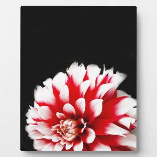 Dahlie auf schwarzem Hintergrund Fotoplatte