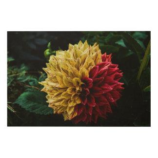 Dahlie-Blume Holzdruck