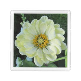 Dahlie-hellgelbe Blume Acryl Tablett