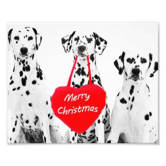 Dalmatiner, die Fotodruck der frohen Weihnachten