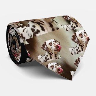Dalmatiner-Hundezucht - das Familien-Haustier Krawatte