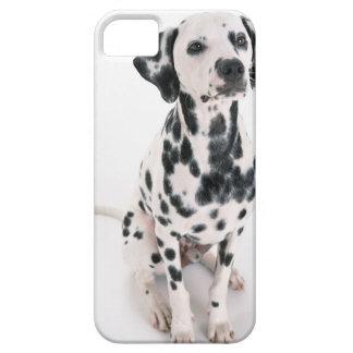Dalmatiner iPhone 5 Hüllen