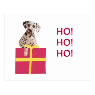 Dalmatinische Geschenkboxen Postkarte