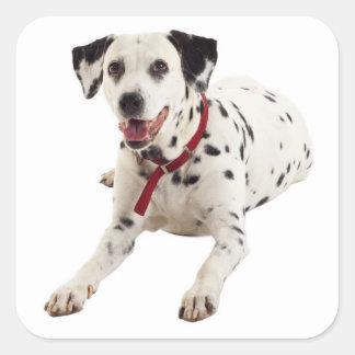 Dalmatinische Hündchen-Gruß-Aufkleber/Aufkleber Quadrat-Aufkleber