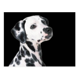 Dalmatinischer Hundeschöne Fotopostkarte Postkarte