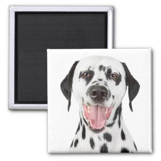 Dalmatinisches Hündchen-- schwarzer u. weißer Quadratischer Magnet
