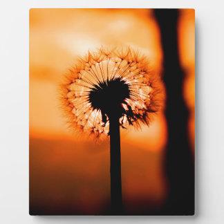 Dandelion Flower ,(Löwenzahn) Fotoplatte