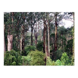 Dandenong erstreckt sich Regenwald, Australien Postkarte