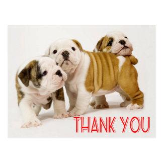 Danke englische Bulldoggen-Hündchen-Postkarte Postkarte