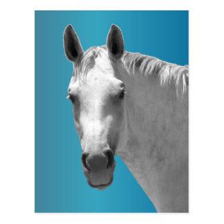 Dapple graues Pferd Postkarte