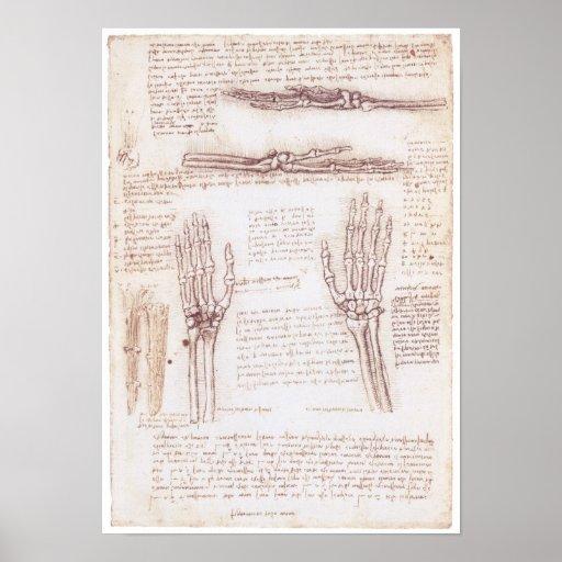 Darstellung der Hand, Leonardo da Vinci Poster