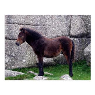 Dartmoor Pony-Fohlen, das Knochen-Hügel-Felsen Postkarte
