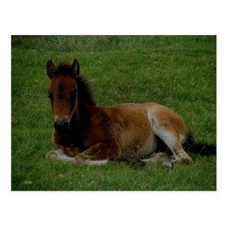 Dartmoor Pony, welches das Stillstehen niederlegt Postkarte