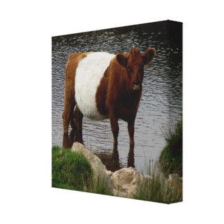 Dartmoor schnallte Galloway-Kuh um, die im Fluss s Gespannter Galeriedruck