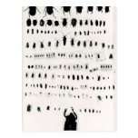 Darwins Insektensammlung Postkarte