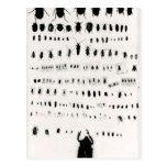 Darwins Insektensammlung Postkarten