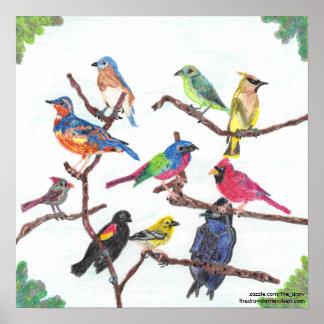 Das Ansammlungs-bunte Singvogel-Plakat Poster