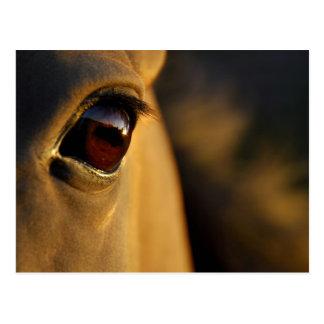 Das Auge des Pferds am Sonnenuntergang Postkarte