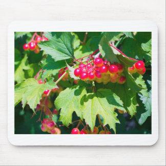 Das Blätter und unausgereifte das Beeren guelder Mauspads