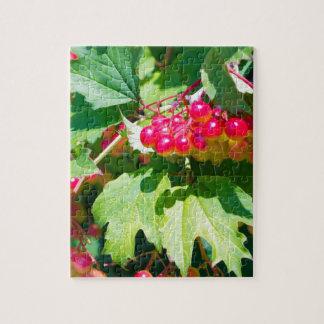 Das Blätter und unausgereifte das Beeren guelder Puzzle
