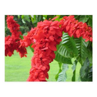 Das Chaconia, die nationale Blume Postkarte