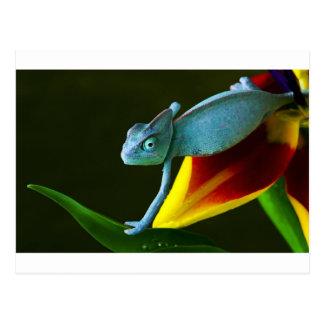 Das fantastische Chamäleon Postkarten