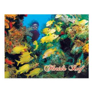 Das Florida-Riff in den Florida-Schlüsseln Postkarte