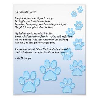 Das Gebet eines Tieres - Foto