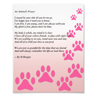 Das Gebet eines Tieres - Fotodruck