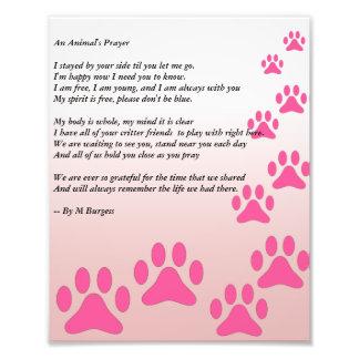 Das Gebet eines Tieres - Photo Druck