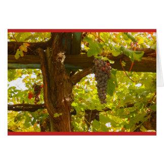 das geometrische Muster der Weinstöcke Karte