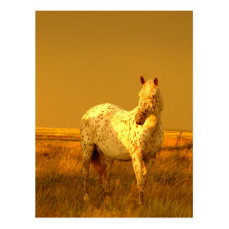 Das gepunktete Pferd im goldenen Glühen eines Postkarte