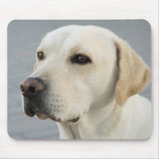 Das goldene Labrador Mousepad