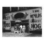 Das größte Schwein-Vintages Karnevals-Foto der lus Postkarte