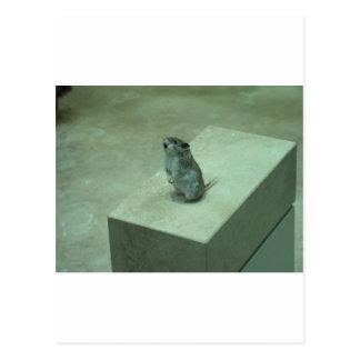Das Heulen der Mörder-Maus (Onychomys Postkarte