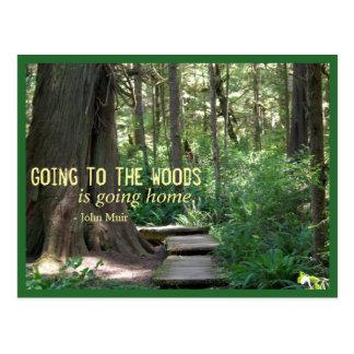 Das Holz (olympische N.P.) Postkarte