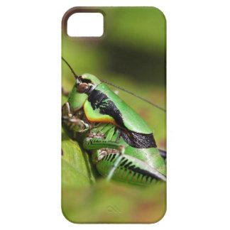 Das katydid Kricket Eupholidoptera chabrieri iPhone 5 Etui
