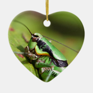 Das katydid Kricket Eupholidoptera chabrieri Keramik Ornament