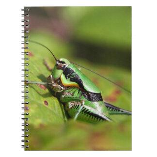 Das katydid Kricket Eupholidoptera chabrieri Notizblock