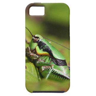 Das katydid Kricket Eupholidoptera chabrieri Schutzhülle Fürs iPhone 5