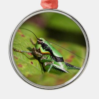 Das katydid Kricket Eupholidoptera chabrieri Silbernes Ornament