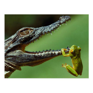 Das Krokodil und der Frosch Postkarte