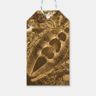 Das Miozän betreffender Kalkstein unter dem Geschenkanhänger