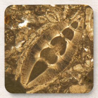 Das Miozän betreffender Kalkstein unter dem Untersetzer