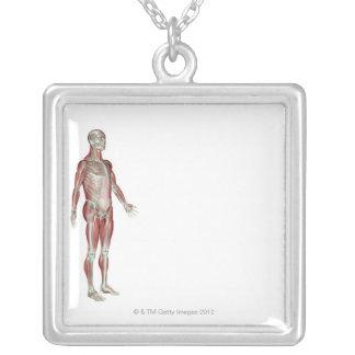Das Musculoskeletal System 13 Versilberte Kette