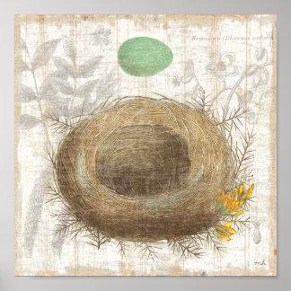 Das Nest eines Vogels mit einem grünen Ei Poster