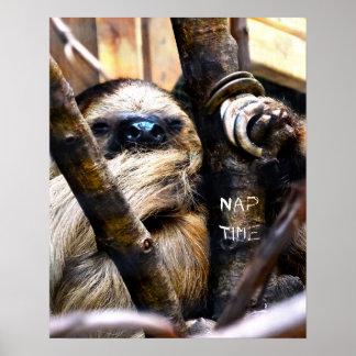 Das Nickerchen-Zeit des Sloths Poster