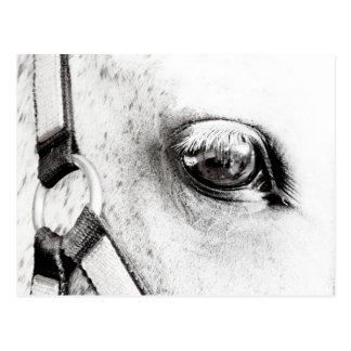 Das PferdeSoul Postkarte