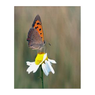 das Schmetterlingsbild Acryl Wandkunst