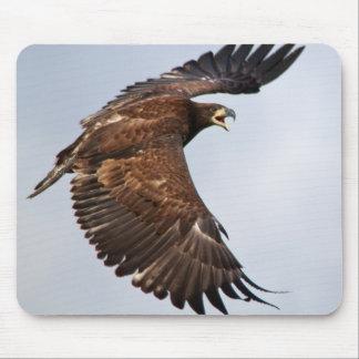 Das Schreien des kahlen Adlers füttern mich Mousepad
